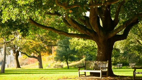 Ein halber Baum pro Jahr - warum das papierlose Büro Sinn macht
