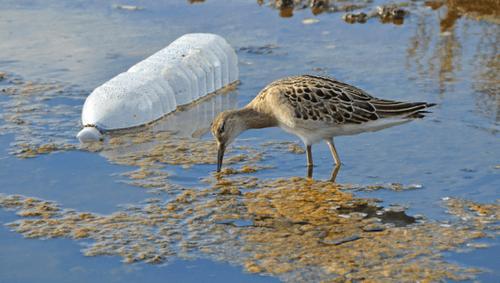 Folgen der Umweltverschmutzung sind die Gründe für Umweltschutz